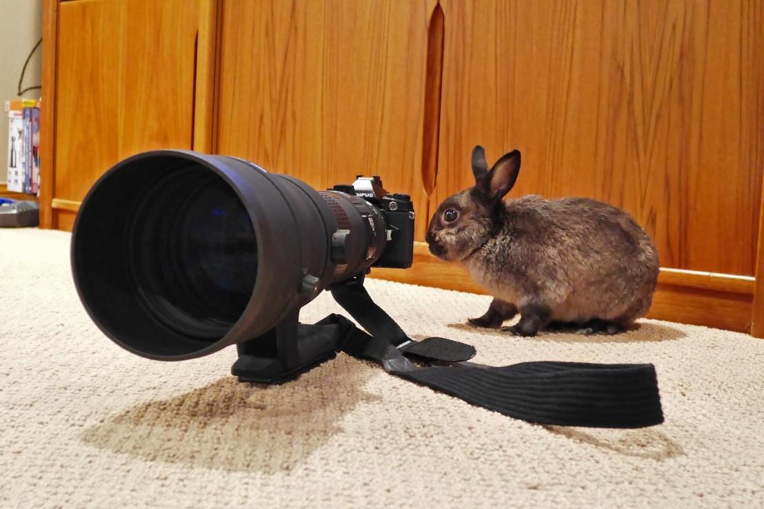 bigmarabbit1