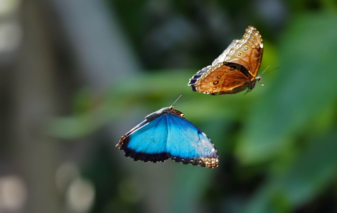 Shooting Butterflies with the E-M1X