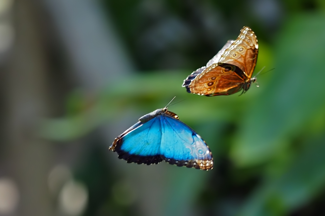 Shooting Butterflies with theE-M1X