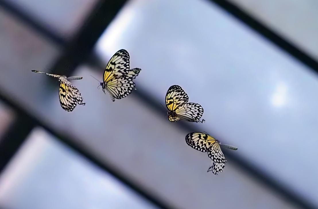 RIcePaperButterflies