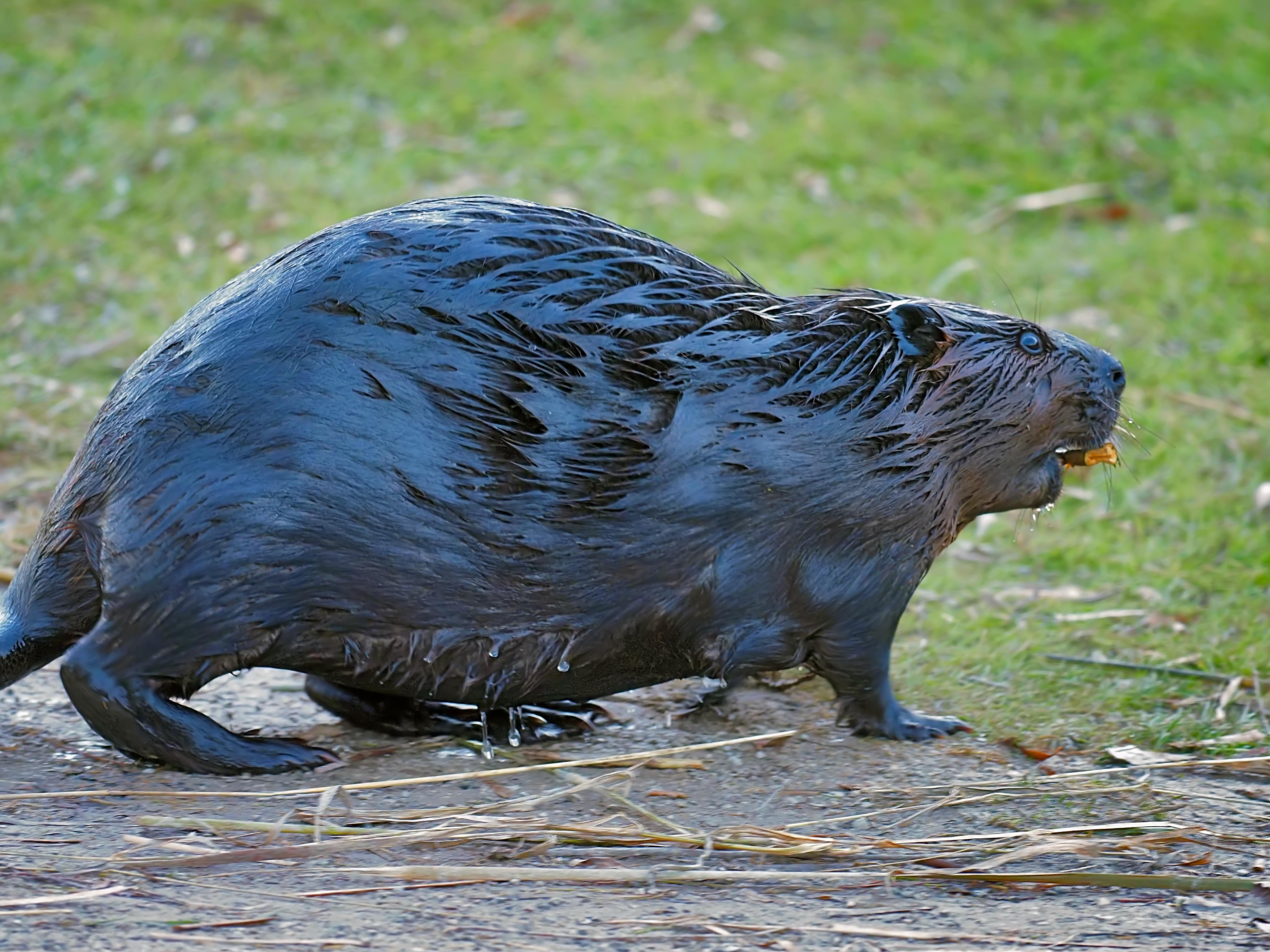 BeaverFall2020